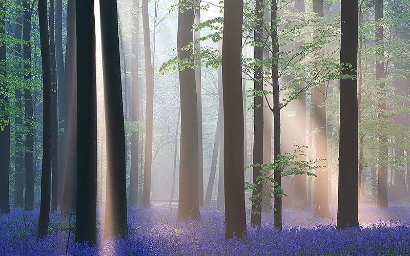 Бельгийский лес